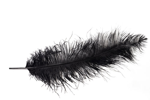 Black Ostrich Feathers 20 inches and up by the Piece