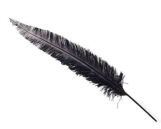 Black Ostrich Nando Feathers 20 inches and up by the Piece