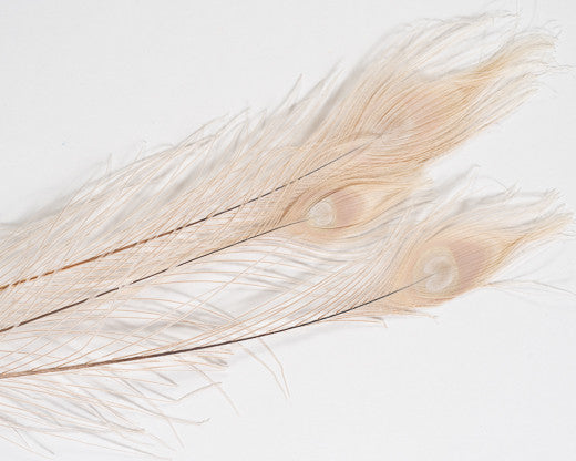 Beige Bleached and Dyed Peacock Feather 25-35 inches 100 Pack