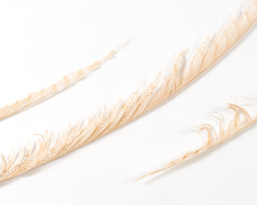 Degraded Zebra Pheasant Feathers 30 inches up by the Piece