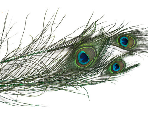 Emerald Stem Dyed Peacock Feather 25-35 inches 100 Pack