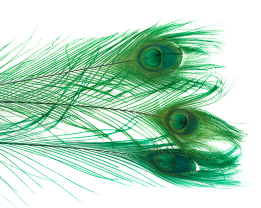 Emerald Bleached and Dyed Peacock Feather 25-35 inches 100 Pack