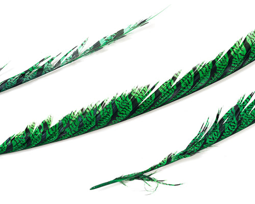 Emerald Zebra Pheasant Feathers 30 inches up, per 5 pieces