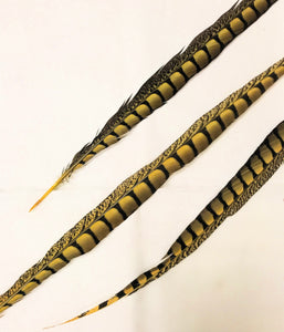 Lady Amherst Pheasant Feathers, Dyed Over Natural, 30-36 inch, per 5 pieces (CHOOSE YOUR COLOR)