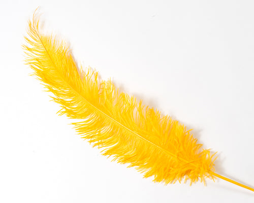Gold Ostrich  Spad Feathers 20 inches and up by the Piece