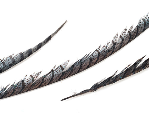 Grey Zebra Pheasant Feathers 30 inches up by the Piece