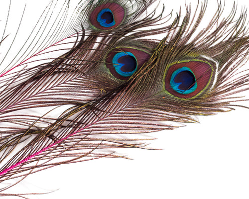 Hot Pink Stem Dyed Peacock Feather 25-35 inches 100 Pack