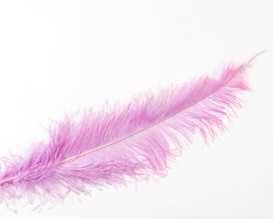 Lilac Ostrich  Spad Feathers 20 inches and up by the Piece
