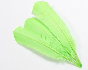 Lime Quill Feathers by the Pound