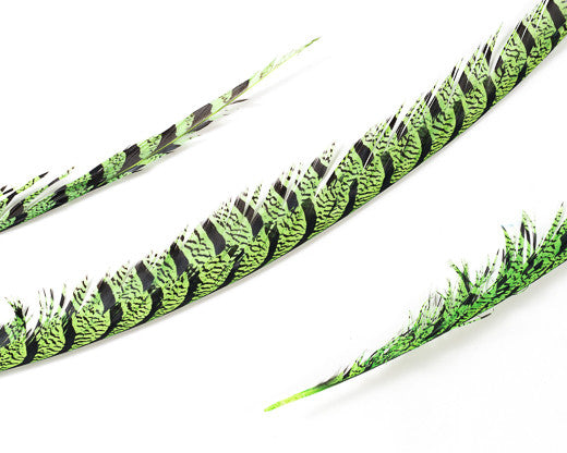 Lime Zebra Pheasant Feathers 30 inches up, per 5 pieces