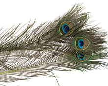 All Stem Dyed Peacock Feather Eyes 25-35 inches 100 Pack (CHOOSE YOUR COLOR)