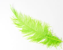 All Ostrich Spad Feathers 20 inches and up, per 10 Feathers (CHOOSE YOUR COLOR)