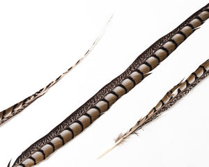 Natural Lady Amherst  Feathers 30-36 inches, per 5 pieces