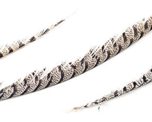 Natural Lady Amherst  Feathers by the Piece (CHOOSE YOUR SIZE)