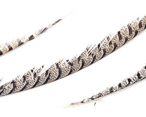 Natural Zebra Pheasant Feathers 30 inches up by the Piece