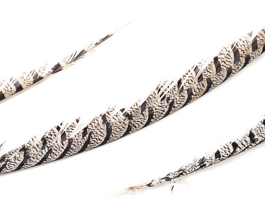 Natural Zebra Pheasant Feathers 30 inches up, per 5 pieces
