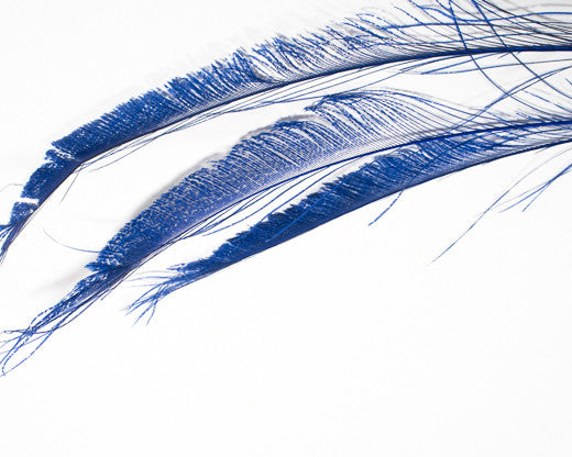 Royal Blue Bleached and Dyed Peacock Swords 25-35 inches 100 Pack