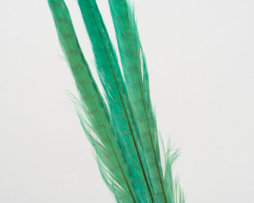 Aquamarine Ringneck Pheasant Feather Bleached and Dyed 22 inches and up, per 10 pack