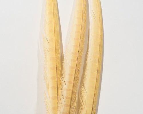 Beige Ringneck Pheasant Feather Bleached and Dyed 22 inches and up, per 10 pack