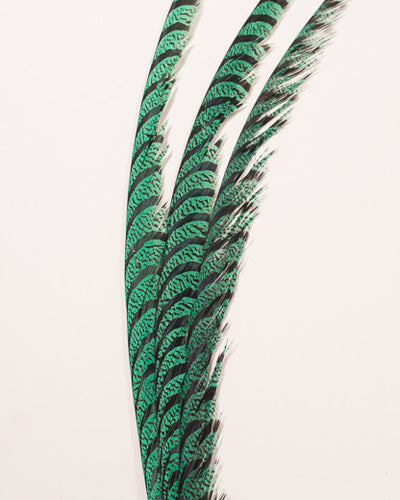 Mint Zebra Pheasant Feathers 30 inches up, per 5 pieces