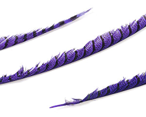 Purple Zebra Pheasant Feathers 30 inches up by the Piece