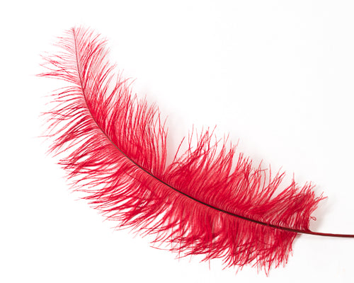 Red Ostrich  Spad Feathers 20 inches and up by the Piece