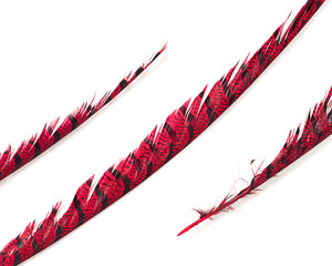 Red Zebra Pheasant Feathers 30 inches up, per 5 pieces