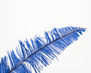 All Ostrich Nando Feathers 18 inches and up, per 10 Feathers (CHOOSE YOUR COLOR)