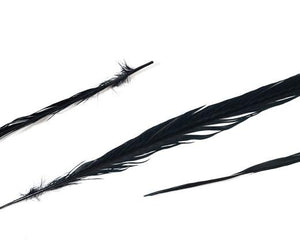 Bleached and Dyed Ringneck Pheasant Feather 22 inches and up, per pack of 10 (CHOOSE YOUR COLOR)