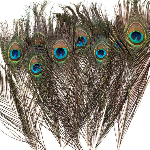 Peacock Feathers Natural, 10-15 Inches, 12 pcs