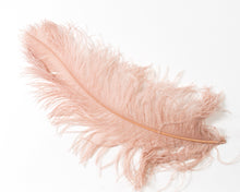 Wholesale Ostrich Feathers, drabs 12-17 inches, per 10 Feathers (CHOOSE YOUR COLOR)