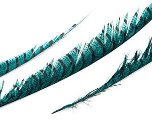 Teal Zebra Pheasant Feathers 30 inches up by the Piece