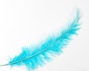 Ostrich Feathers 20 inches and up Second Quality by the Piece (CHOOSE YOUR COLOR)