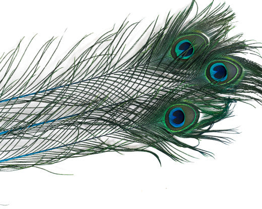 Turqouise Stem Dyed Peacock Feather 25-35 inches 100 Pack