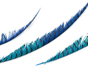 Royal and Turquoise Zebra Pheasant Feathers 30 inches up by the Piece