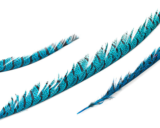 Turqouise Zebra Pheasant Feathers 30 inches up, per 5 pieces