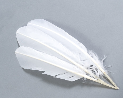 White Quill Feathers by the Pound