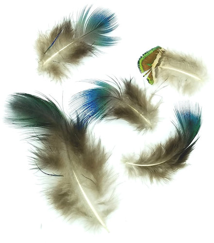Peacock Plumage, Natural Mix - 1/2 ounce