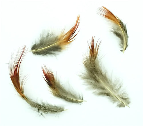 Pheasant Feathers, Plumage, Golden Pheasant, per Ounce