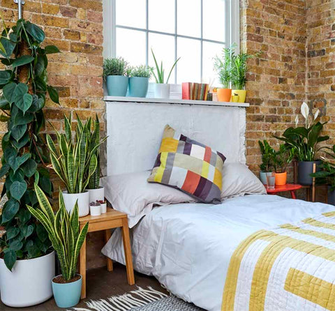 Patch London House Plants Potted Plants Room Styling