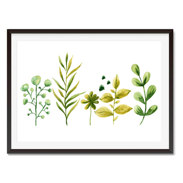 Watercolour Herbs Wall Art Print