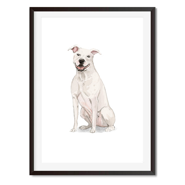 White American Staffordshire Terrier Watercolour Dog Print