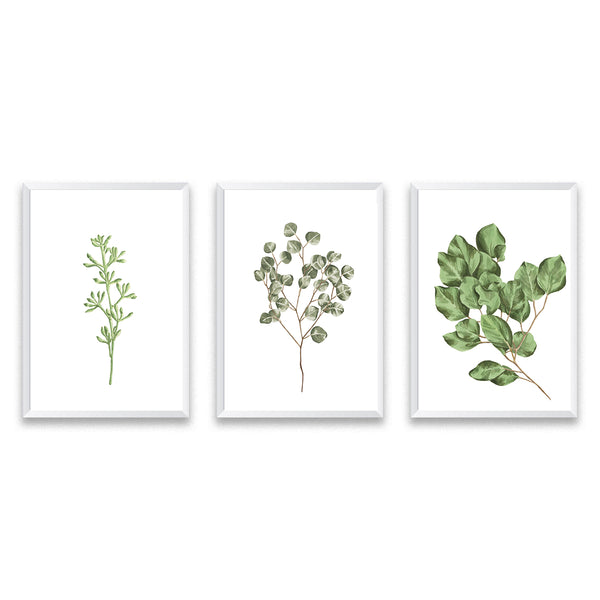 Set Of Three Botanical Leaf Poster Art Prints - Mode Prints