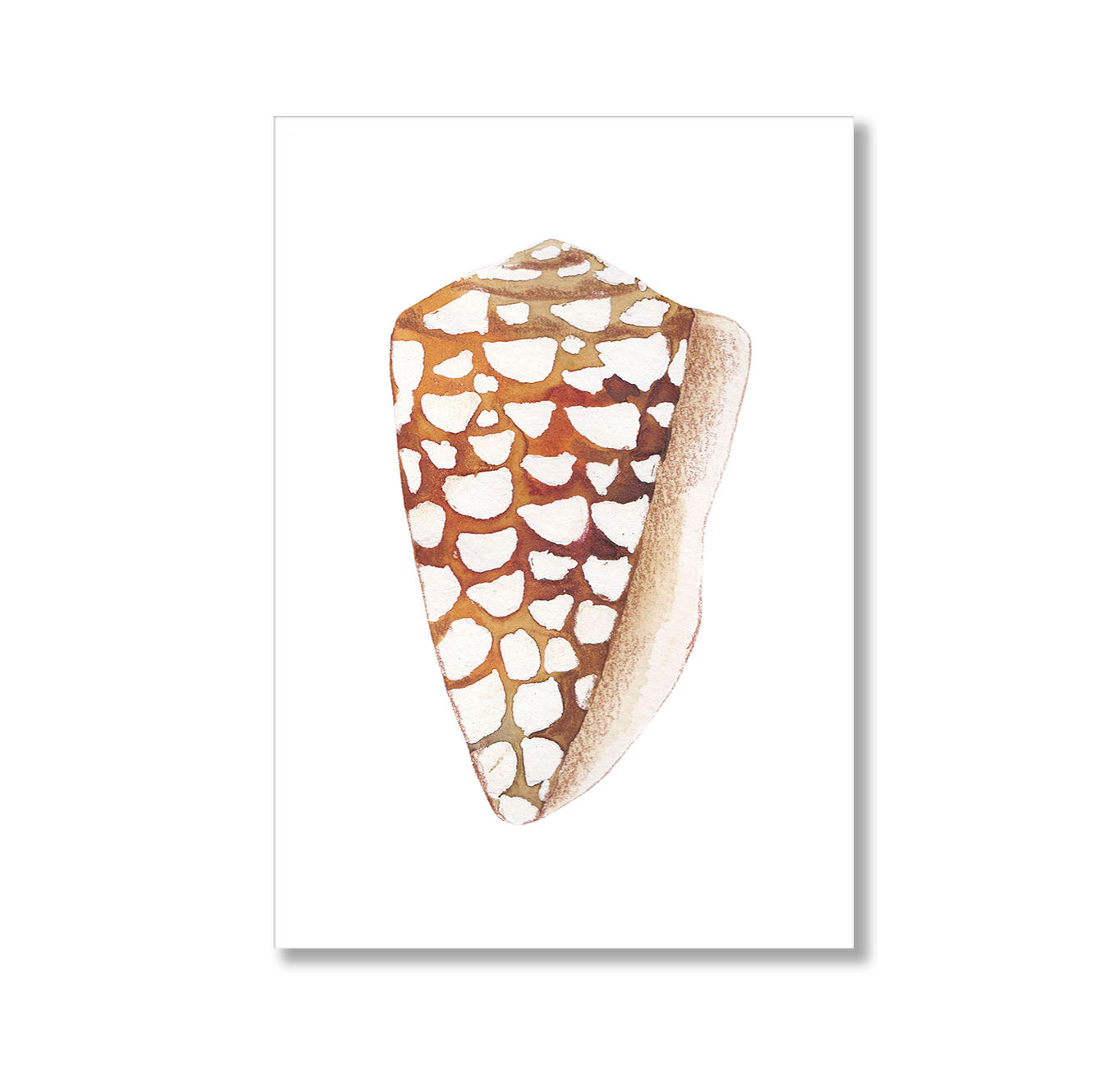 Brown Shell Illustration Poster Print-Print-Mode Prints
