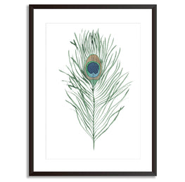 Peacock Feather Poster Print