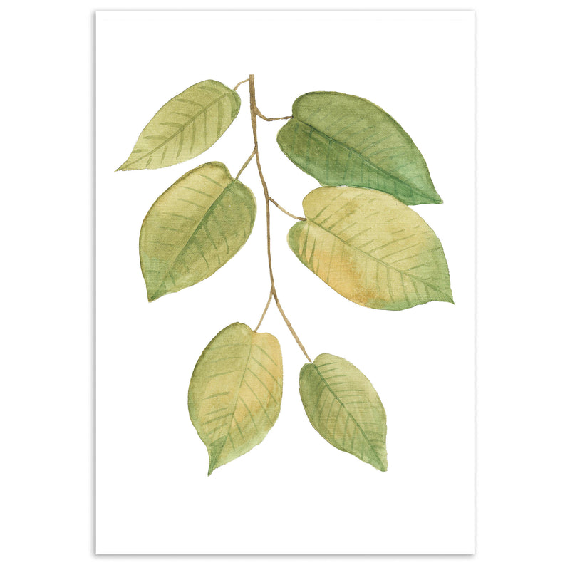 Watercolour Sicilian Leaves Wall Art Print