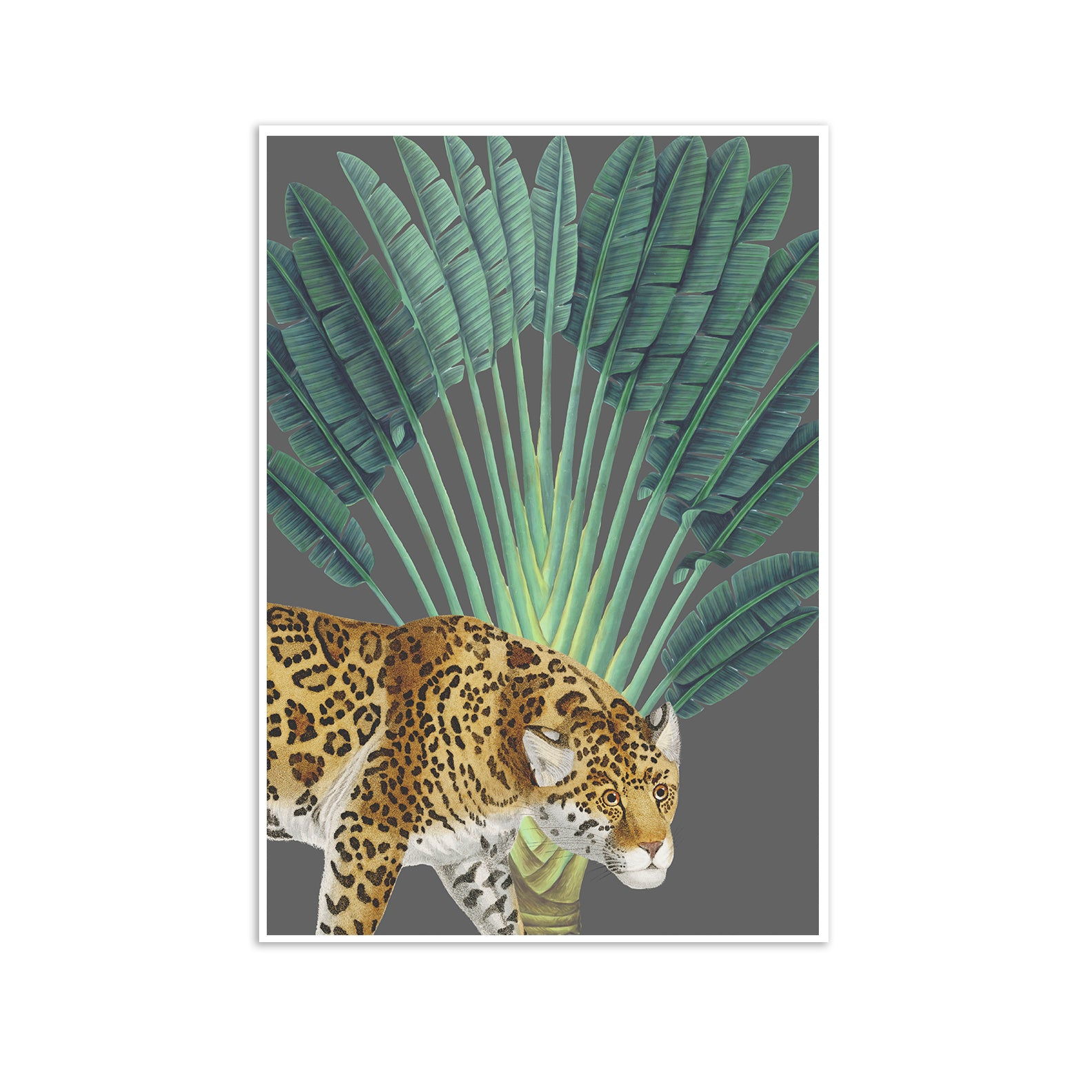 Tropical Jungle Leopard Poster Print