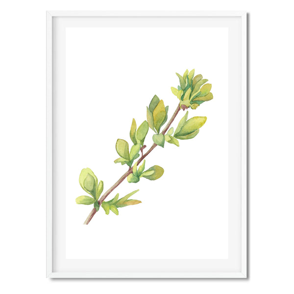 Watercolour Leaf Branch Wall Art Print