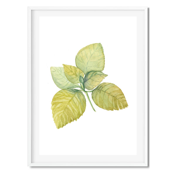 Watercolour Leaf Nature Wall Art Print
