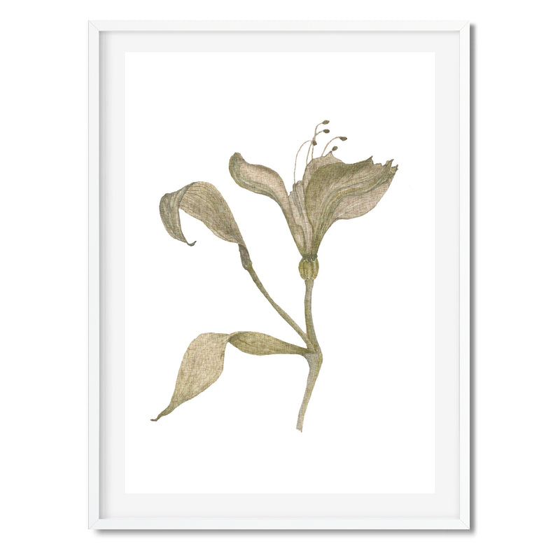 Watercolour Vintage Botanical Wall Art Print